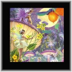 Carte photo + CD musique Fées des champignons